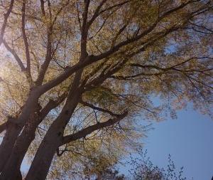 眠る木、巡る木