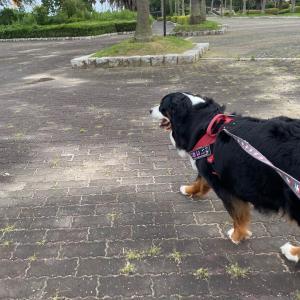 いつもの散歩