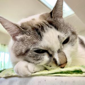 ■ネコの居場所術。
