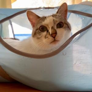 ■ネコの習慣術。