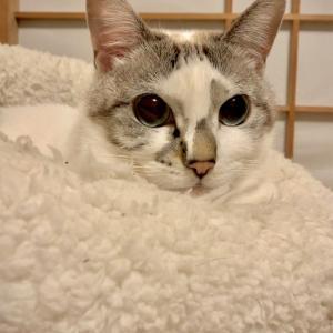 ■ネコの境目術。
