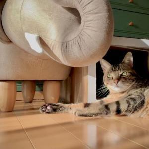 ■ネコの感覚術。