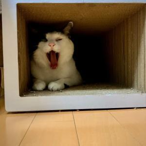 ■ネコの機転術。