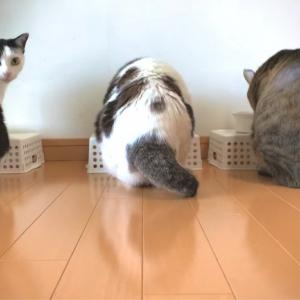 ■ネコの平穏術。