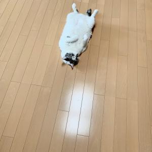 ■ネコの疑似術。