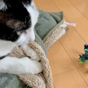 ■ネコの重量術。