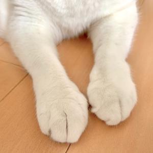 ■ネコの側近術。