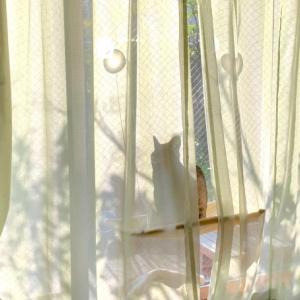 ■ネコのメルヘン術。
