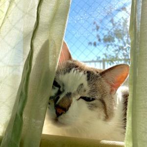 ■ネコの温度術。