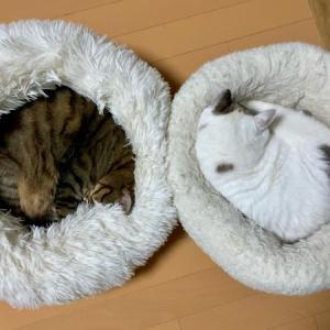 ■ネコの囲い術。