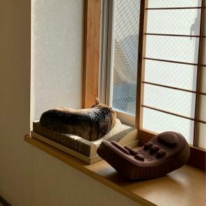 ■ネコの2度見術。