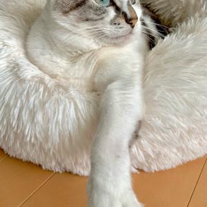 ■ネコの正確術。