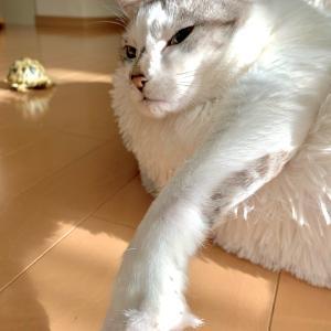 ■ネコの貫禄術。