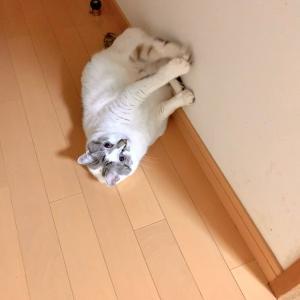 ■ネコのスタートダッシュ術。