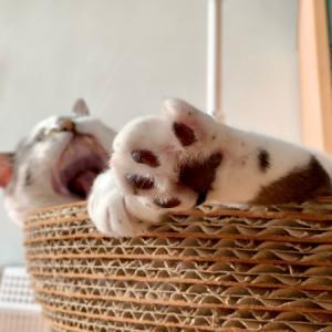 ■ネコのきらきら金曜日術。