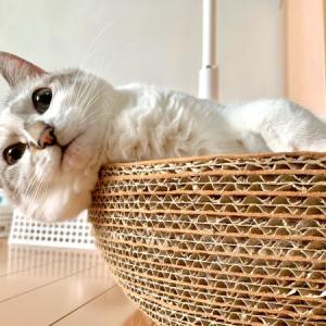 ■ネコの中身術。