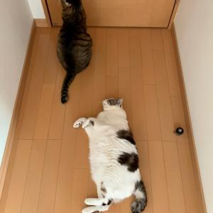 ■ネコの占拠術。