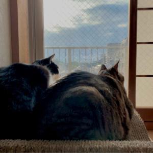 ■ネコの発見術。
