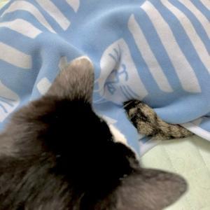 ■ネコのIN術。