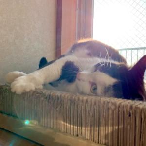 ■ネコの反省術。
