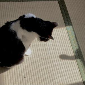 ■ネコの影縫い術。