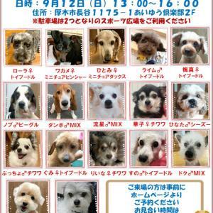 【譲渡会のお知らせ】9/12厚木譲渡会