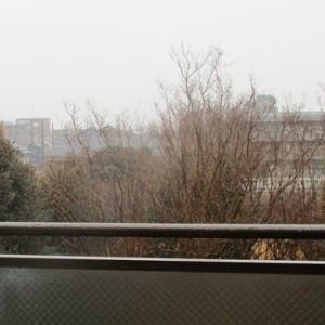 エッセイ(667)東京の初雪