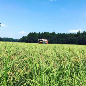 稲刈り始まりました!!
