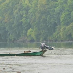 四万十川のアカメ釣り