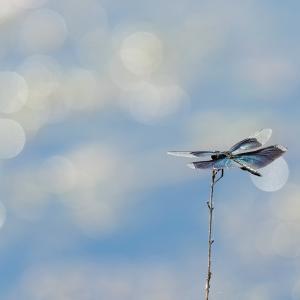 蒼い弾丸から最速の鳥へ