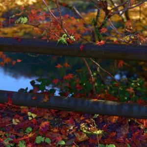 秋が通過中「内山観音」