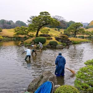 ご飯を人に頼るカモ「水前寺公園」