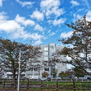 桜の木がはげちきた(三重川)