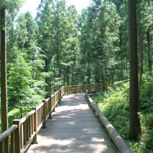 タイトル:森で特別な思い出を作ってみましょう〜帝岩山(チェアムサン)自然休養林
