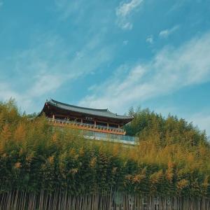 竹の香りを追う旅 < 潭陽(タミャン)竹緑苑(チュンノグォン) >