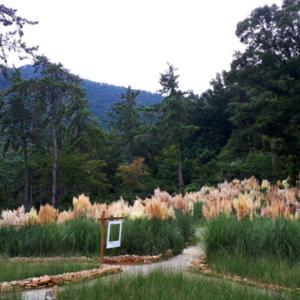 海南(へナム)最南端の宝石 – フォレスト樹木園