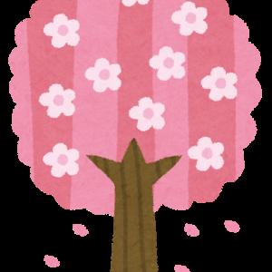 桜をみながらアレコレと
