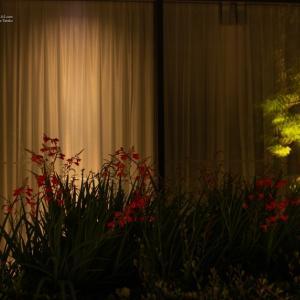 未明の花壇