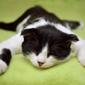体調不良時は早めに休息する