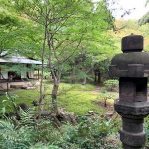 旧古河庭園 3 日本庭園 *東京都北区西ヶ原
