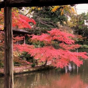 久伊豆神社 * 池ともみじの紅葉