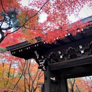 少し早い東漸寺の紅葉