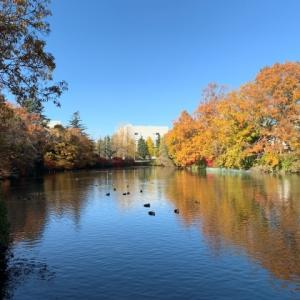 理窓会記念公園を散策