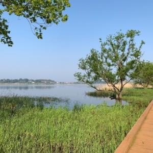 朝の牛久沼河童の小路を散策