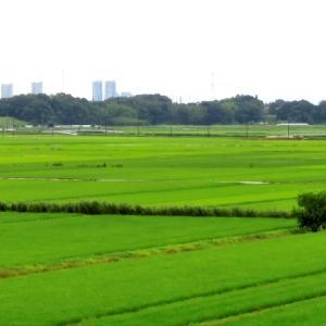 一面緑の風景