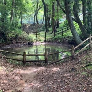 逆井城跡公園 7 * 鐘掘池と内堀跡