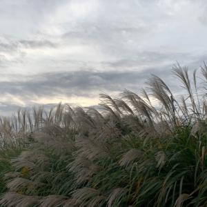 ススキと朝の空