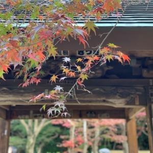 2020* 本土寺の紅葉