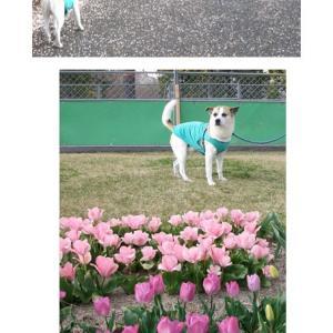 スカイパークは花盛り