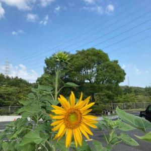 向日葵の花が咲いた